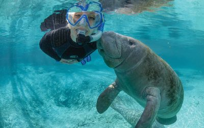Making Waves In The Manatee Capital